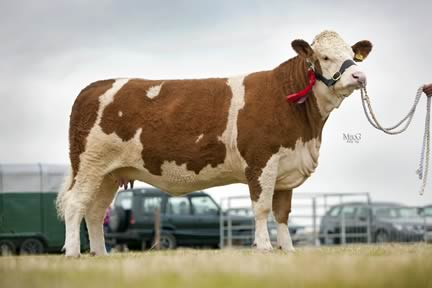 Corskie Blossom - 1st place for Heifer, born between 01.08.2010 and 31.03.2011