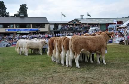 Interbreed Champion Group of Five at the Royal Welsh Show