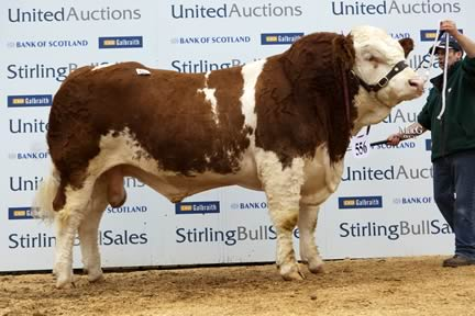 Team Celtic - 11,000gns