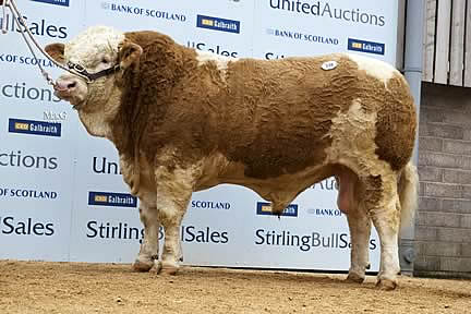 Newbiemains Boston - 10,000gns