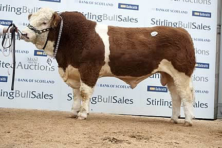 Drumsleed Cairo - 10,000gns