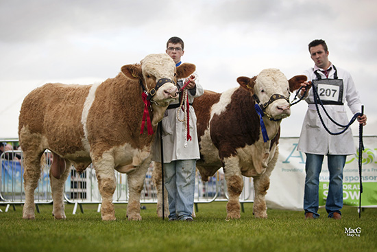 Qualifiers for the Ivomec Super Simmental Pair of the Year competition were Slievenagh Emperor and Slievenagh Extra Special owned by the Boyd family, Portglenone.