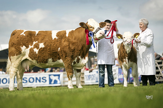 Woodford Paula bred by Thelma Gorman, Armagh, was the winner of the senior cow class at Balmoral Show. She was accompanied by her four-month-old heifer calf Woodford Penny.
