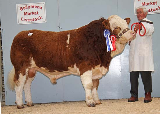 Willie Phair's Coolcrannel Echo claimed the reserve male championship and sold for 2,800gns.
