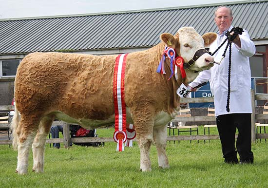 Joe Wilson, Newry, exhibited Ballinlare Farm Empress, the female and supreme overall Simmental champion at Armagh Show. Picture: Julie Hazelton