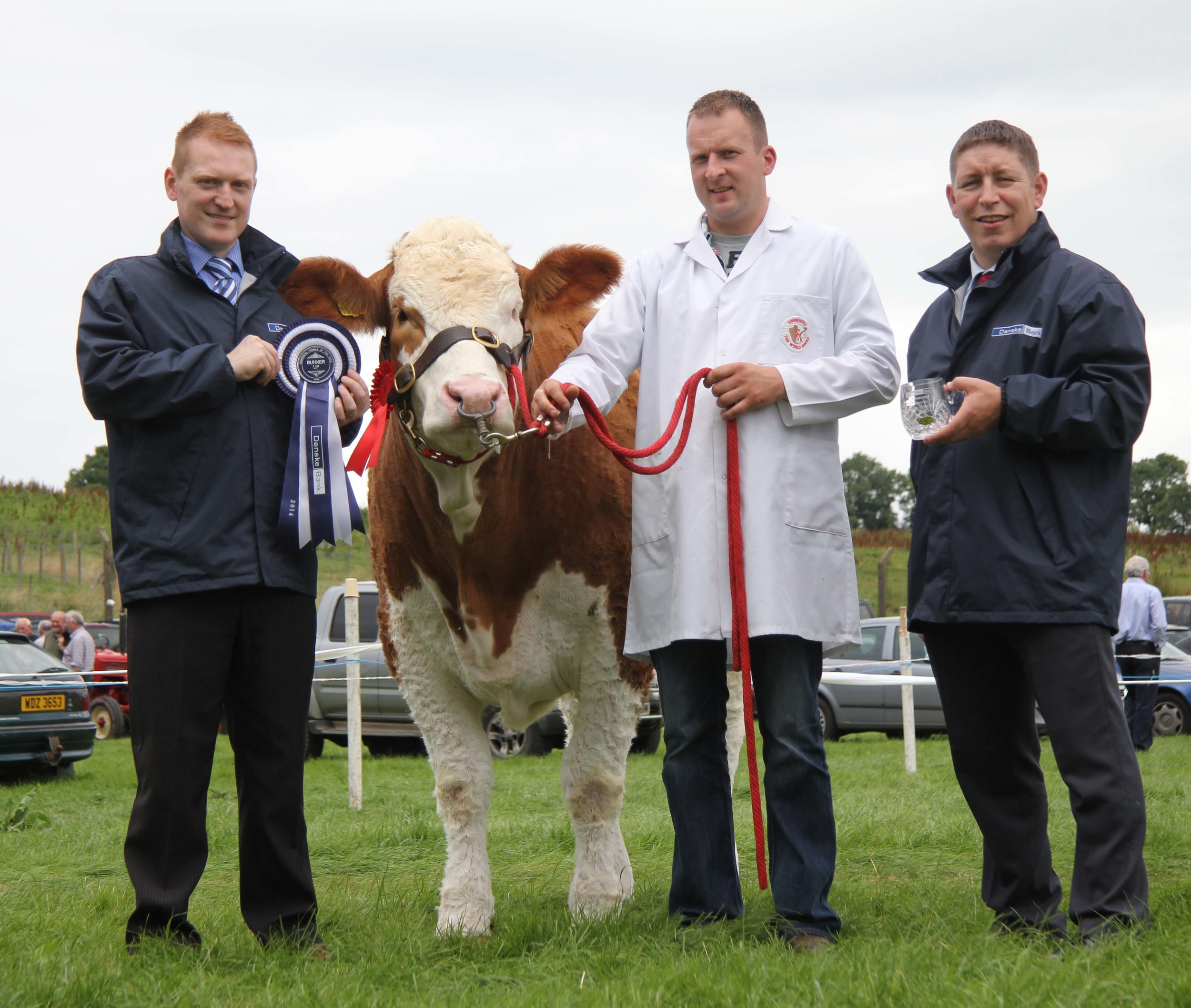 Danske Bank Reserve Simmental Female of the Year was Ranfurly Weikel 11th shown by Jonny Hazelton, Dungannon. Included are sponsors William Noble and Matthew Johnston, Danske Bank.