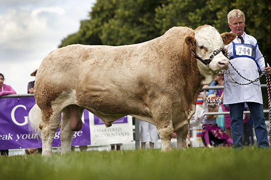Lisglass BarnabusMale Champion, 1st place bull, born on or before 31.12.11 At the English National Show, Royal Norfolk