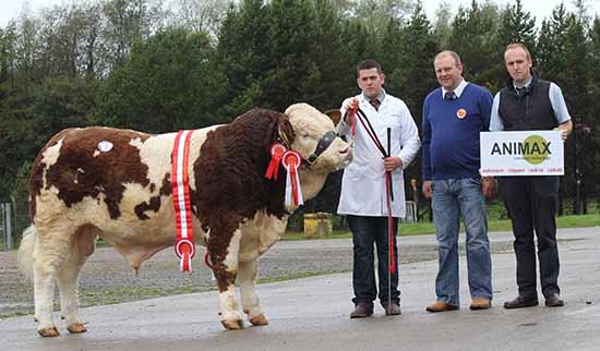 Male and supreme overall champion was Castlemount Ernie bred by Duncan McDowell, Newtownards. Handler Richard McKeown was congratualted by Matthew Cunning, judge, Glarryford; and Neil Acheson, Animax, sponsor.