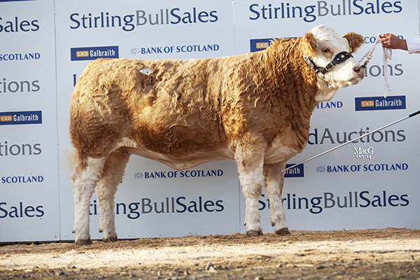 Williams Malvenas 4th 3,000gns