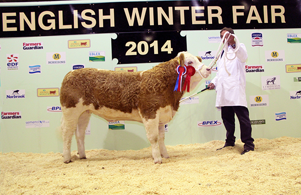 Overall Champion Calf & Champion Heifer Calf sired by a Pedigree Simmental Bull  Deerhurst Fern - Mr G T Van Der Gucht