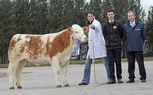 Reserve female champion was Conrad Fegan's Knockreagh Ella Rose which sold for 2,300gns. Included are judge Andrew Clarke, Tynan; and sponsor Andrew Tecey, Danske Bank.