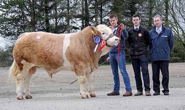 Reserve male champion was Haystar Eclipse whon by Kyle Hayes, Upper Ballinderry, Lisburn. Included are judge Andrew Clarke, Tynan; and sponsor Andrew Tecey, Danske Bank.