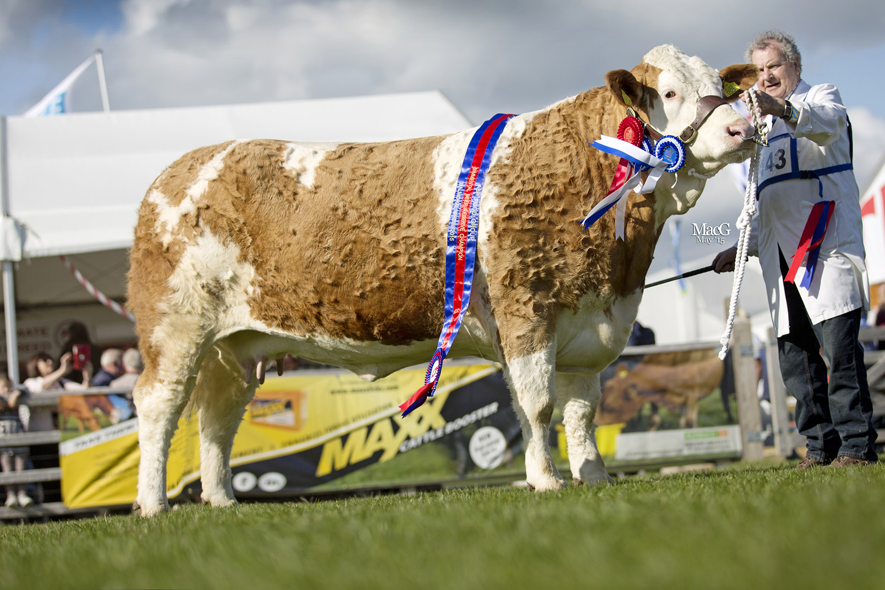 Female and reserve supreme champion was Raceview Cindy Matilda ET shown by Wesley Abraham, Irvinestown. Picture: MacGregor Photography