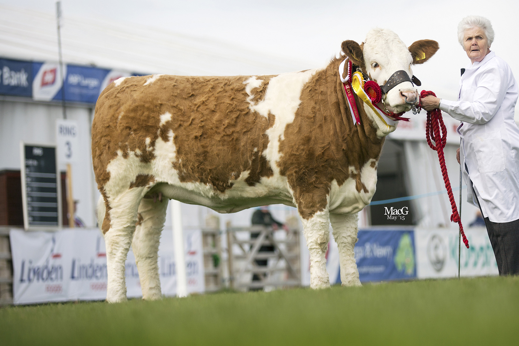 Reserve junior champion was Woodford Penny bred and exhibited by Mrs Thelma Gorman, Armagh. Picture: MacGregor Photography