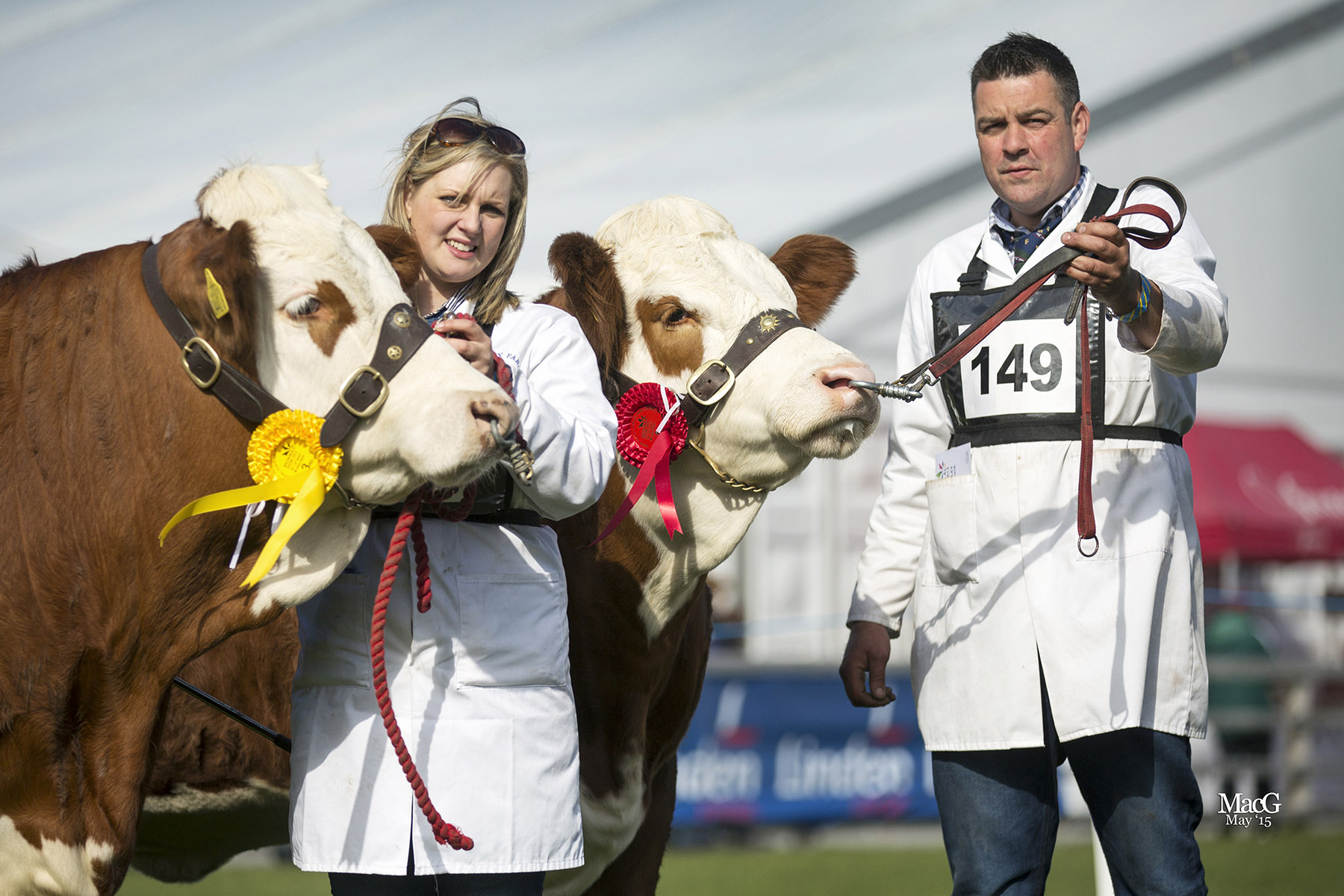 The Balmoral Show qualifiers for the Ivomec Super Simmental Pair of the Year Competition were Scribby Farms Exquisiter and Scribby Farms Elegant bred by Andrea and Keith Nelson, Rosslea. Picture: MacGregory Photography