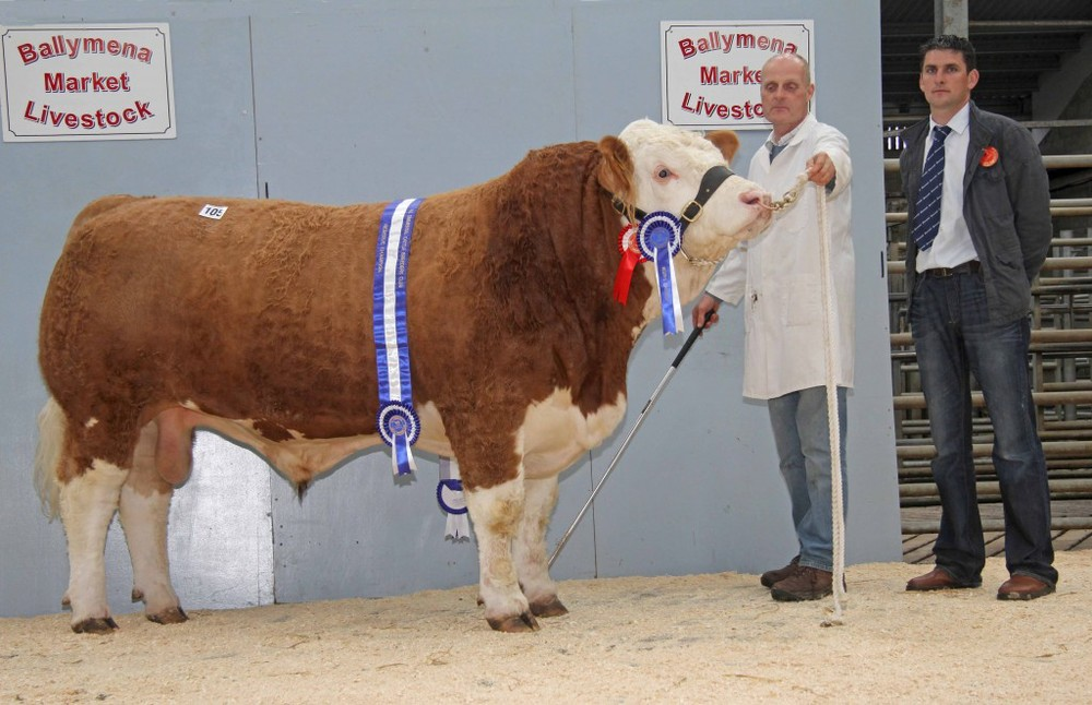 Michael Robson, Doagh, exhibited the reserve male and reserve supreme champion Kilbride Farm Enty which sold for top price of 4,800gns. Included is judge Conrad Fegan, Rostrevor. Picture: Julie Hazelton