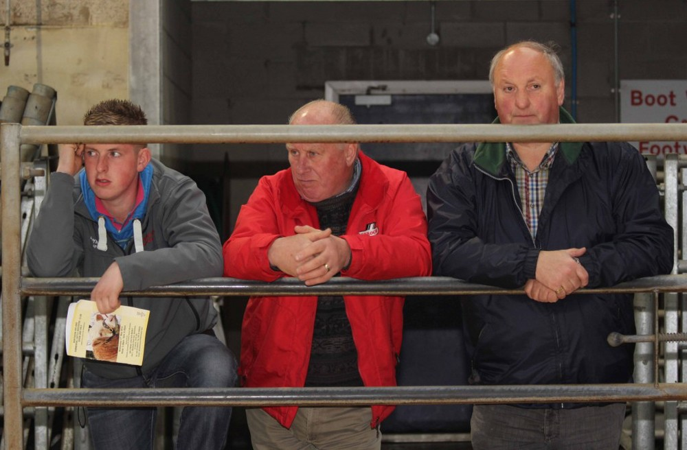 Taking a keen interest in the Simmental judging at Ballymena are Alan Burleigh, Florencecourt; Harold Stubbs, Lisbellaw; and Ralph Pickering, Magherafelt. Picture: Julie Hazelton