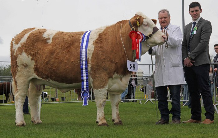 Female and reserve supreme champion was Raceview Cindy Matilda exhibited by Wesley Abraham, Irvinestown. Included is judge Andrew Clarke, Tynan.