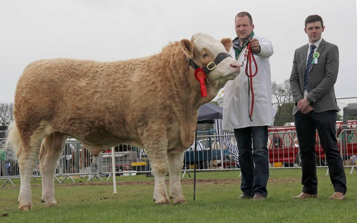Reserve malel champion was the junior bull Ranfurly Formula exhibited by Jonny Hazelton, Dungannon. Included is judge Andrew Clarke.