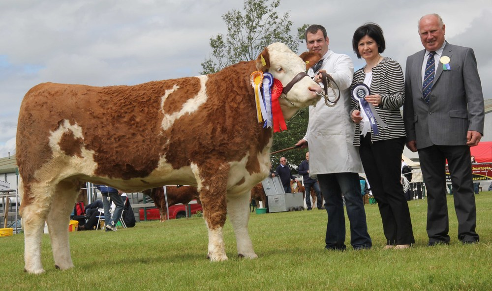 Reserve female and second reserve Simmental champion at Omagh Show was Coolcran Lady Erin exhibited by Shane McDonald, Tempo. Making the presentation are Ann McCrory, Danske Bank; and judge Harold Stubbs, Lisnaskea.