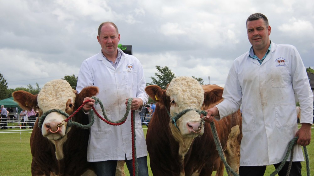 The Omagh Show qualifiers for the Ivomec Super Simmental Pair of the Year Competition were Drumacritten Fred and Drumacritten Fermanagh exhibited by brothers George and Keith Nelson, Rosslea.