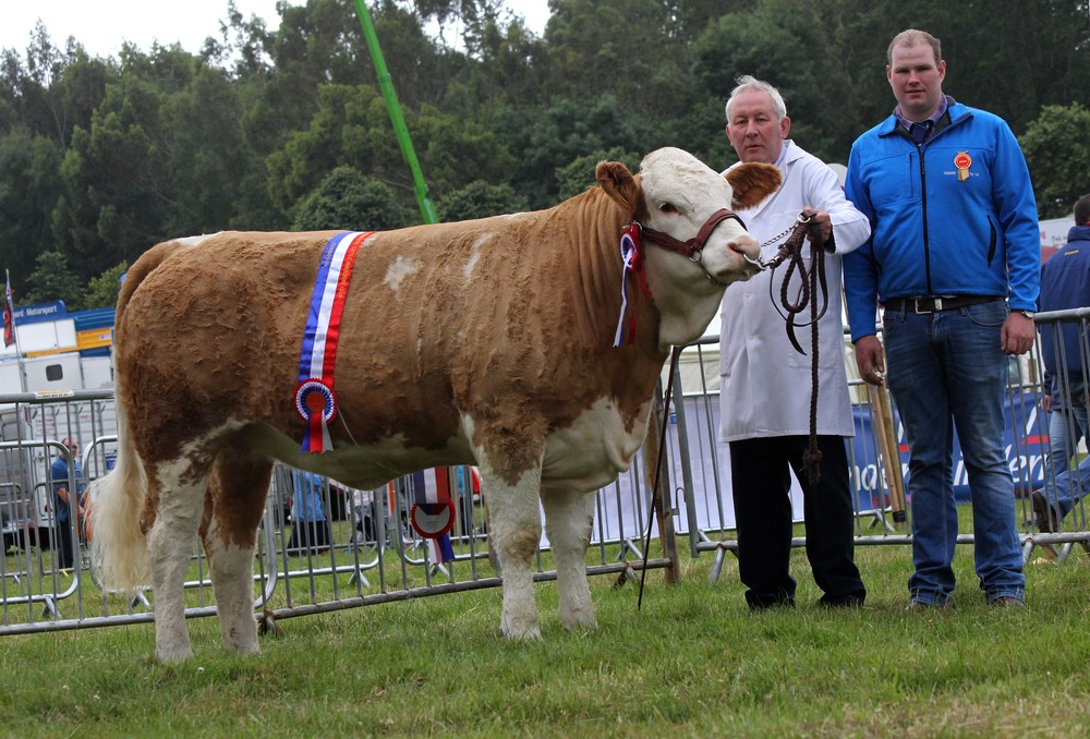 Robert Forde, Tempo, exhibited the female and supreme overall Simmental Champion Mullyknock Forget-Me-Not. Included is judge Stewart Wilson, Maghera.