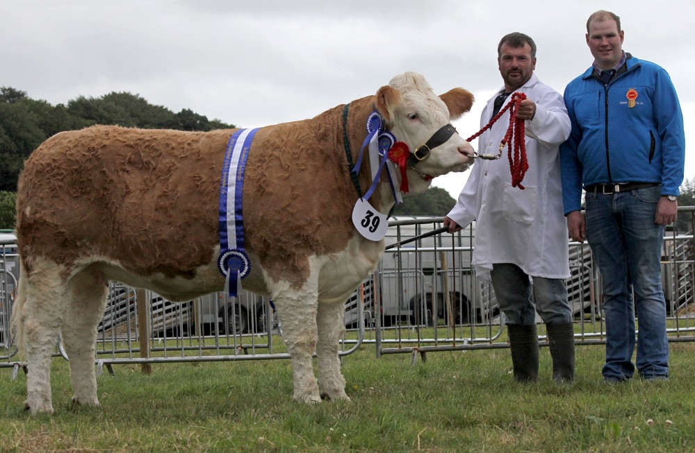 Reserve female and reserve supreme Simmental champion was Ballinlare Farm Esmeralda shown by Alan Wilson, Newry. Adding his congratulations is judge Stewart Wilson, Maghera.