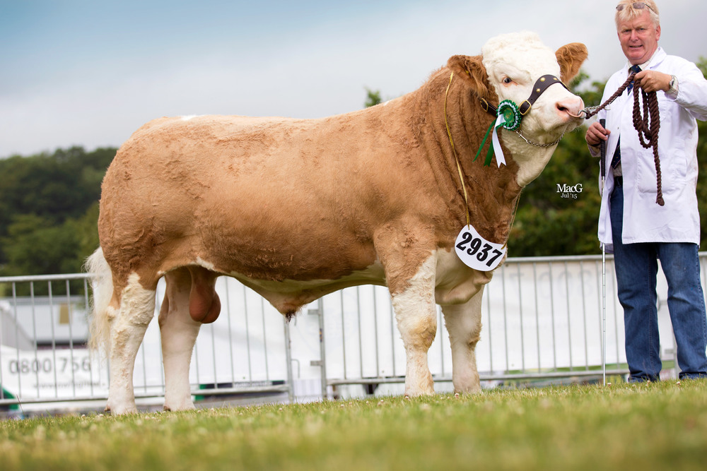 Storersmith Fireball XL5 14 - Reserve Male Champion