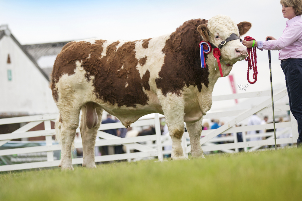 Newbiemains Flamin Brilliant 14 - Male Champion & Reserve Junior Champion