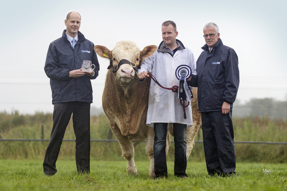 Danske Bank Simmental Male of the Year was Ranfurly Formula 1 exhibited by Jonny Hazelton, Dungannon. Adding their congratulations are Matthew Johnston, agri business manager, Enniskillen; and John Henning, head of agricultural relations, Danske Bank.