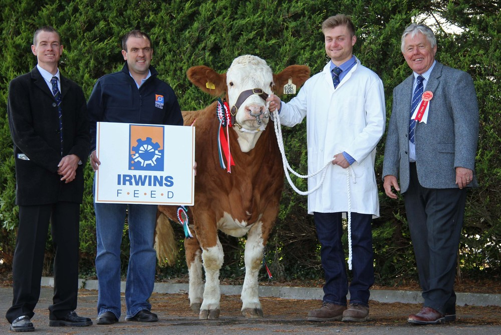 Matthew Robson exhibited the reserve champion Kilbride Farm Eunice 169E. Pictured, from left: Richard Rodgers, chairman, NI Simmental Cattle Breeders' Club; Ian Cummins, Irwins Feed, sponsor; and judge David Donnelly.