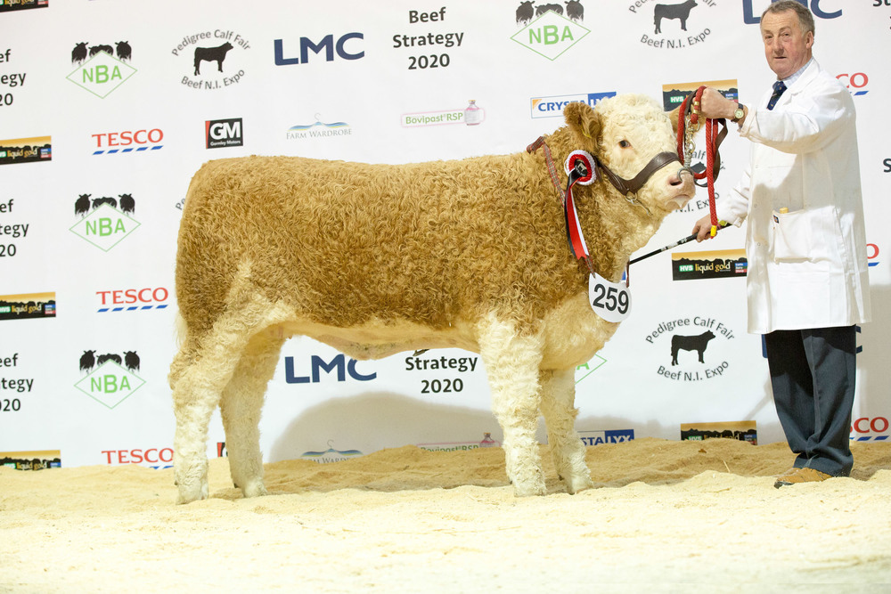 Adrian Richardson exhibited the reserve junior Simmental champion Cleenagh Good Girl.