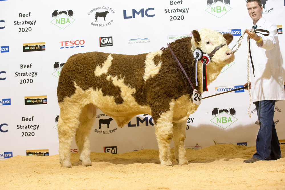 Paul McDonald exhibited the junior Simmental champion Coolcran Gladiator.