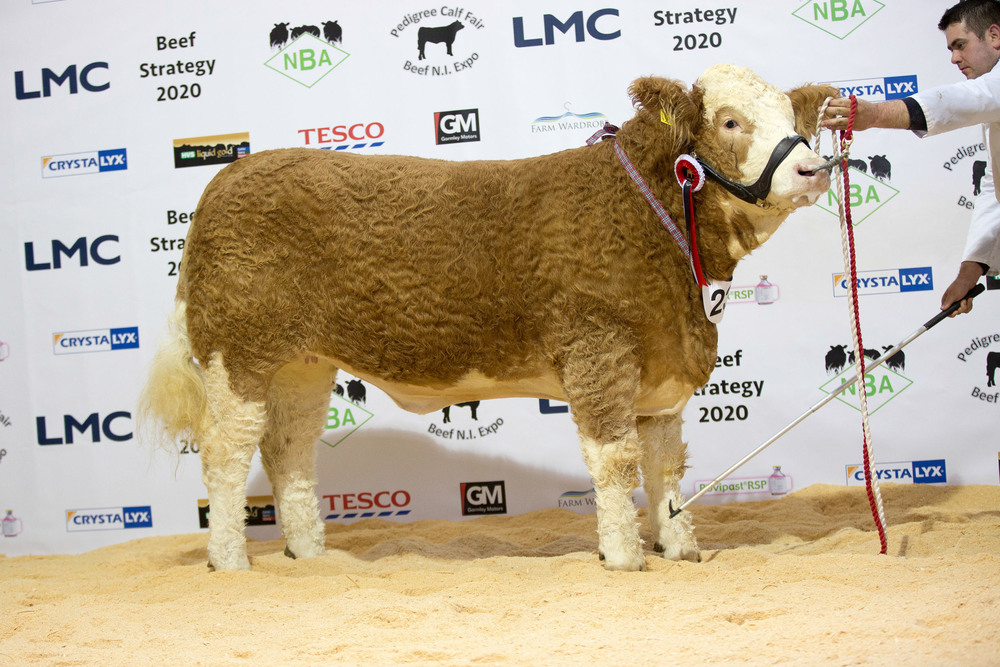 Duncan's McDowell's first prize winning heifer Castlemount Bianca 2.