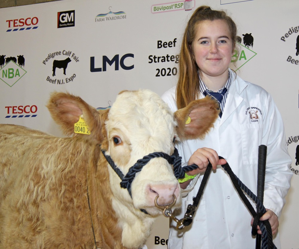 English breeder Lizzie Harding was placed second in the showmanship section at the Pedigree Calf Fair @ Beef NI Expo. She is pictured with Ranfurly Weikel 16th.