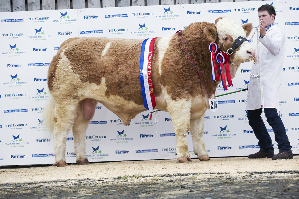 Islavale Fendt - Senior Champion, Senior Male Champion & Reserve Interbreed Champion.