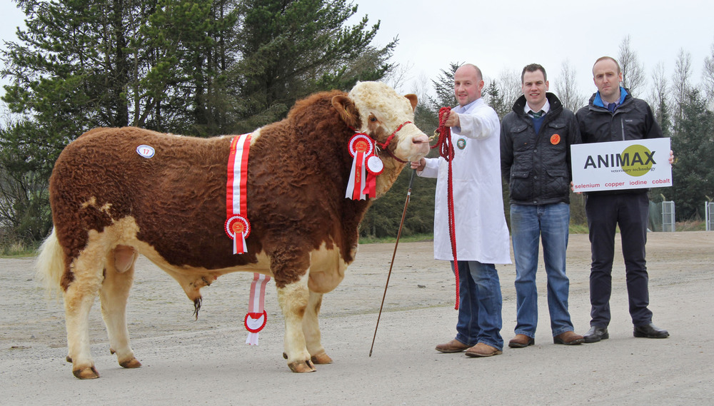 Gavin McCaw, Killinchy, exhibited the male and supreme overall champion Ashdale Flint. Adding their congratulations are judge Shane McDonald, Tempo; and sponsor Neill Acheson, Animax.