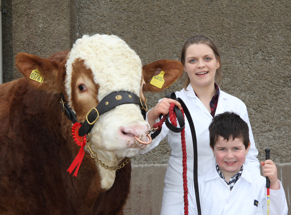 A delighted first-time exhibitor Jamie Bell, Aughnacloy, with his first prize winning bull Drumearn Flame. The bull was shown by Zara Stubbs.