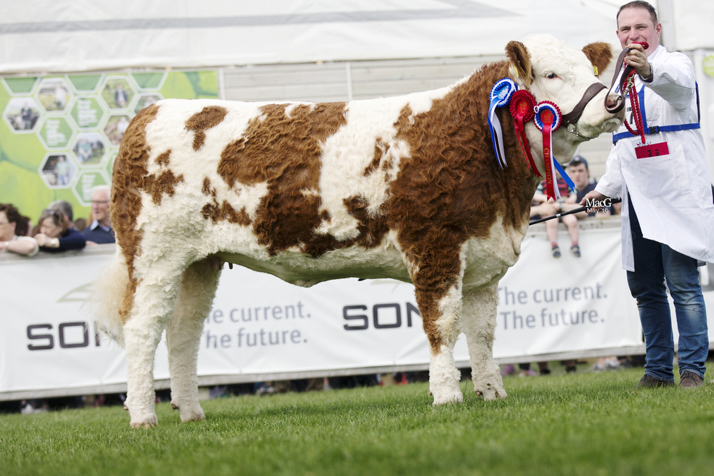 Tawley Gretta - Supreme, Female & Junior Champion
