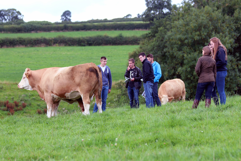 5 viewing bennant cows.jpg