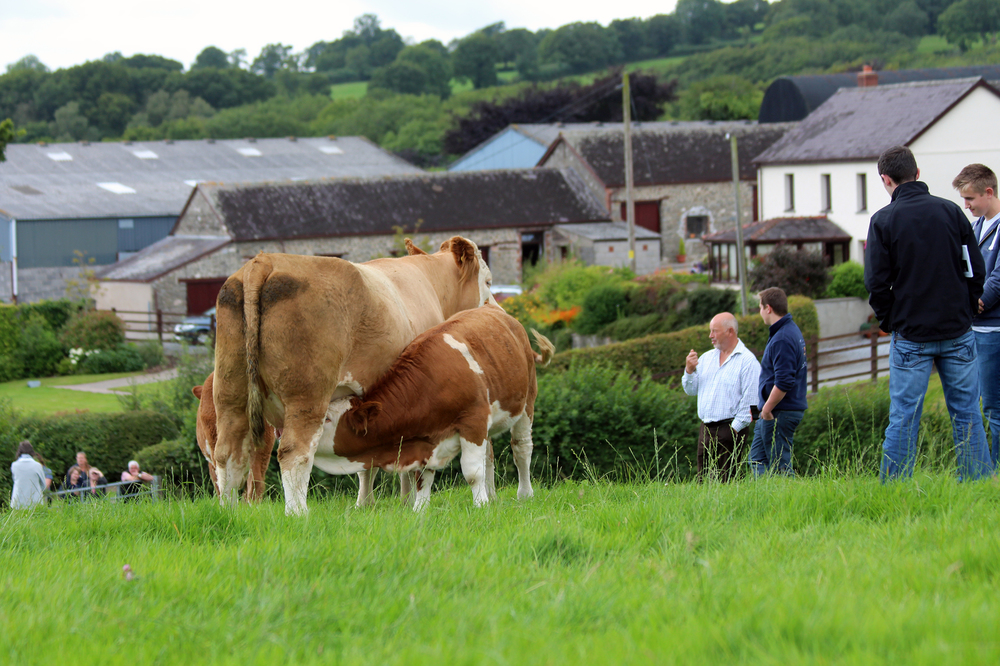6 calf sukling with farm in background.jpg