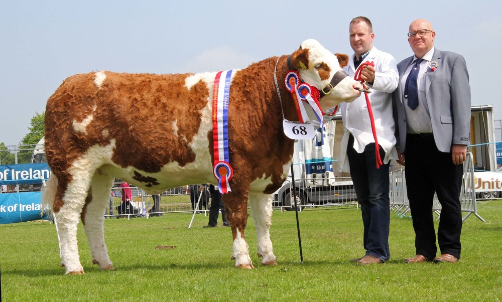 Female and supreme overall champion Ranfurly Lady Diana 24th exhibited by Jonny Hazelton. Included is judge Tony O'Leary, Co Cork.