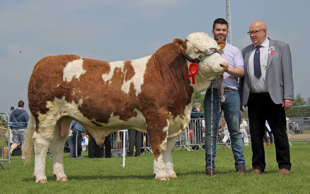 Peter Hughes exhibited the male champion Kilmore Gus bred by Chris Traynor, Armagh. Included is judge Tony O'Leary.