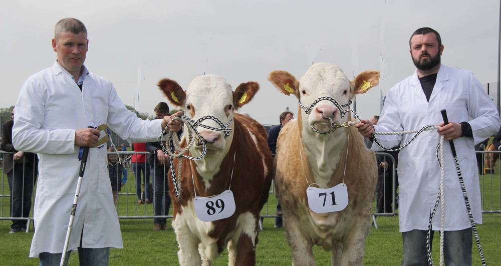 Ballymena Show qualifiers for the Ivomec Super Simmental Pair of the Year competition were Drumagarner Flynn and Drumagarner Grace owned by Eamon McCloskey, Kilrea.