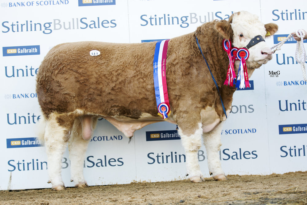 Corskie Gingersnap Overall & Senior Champion