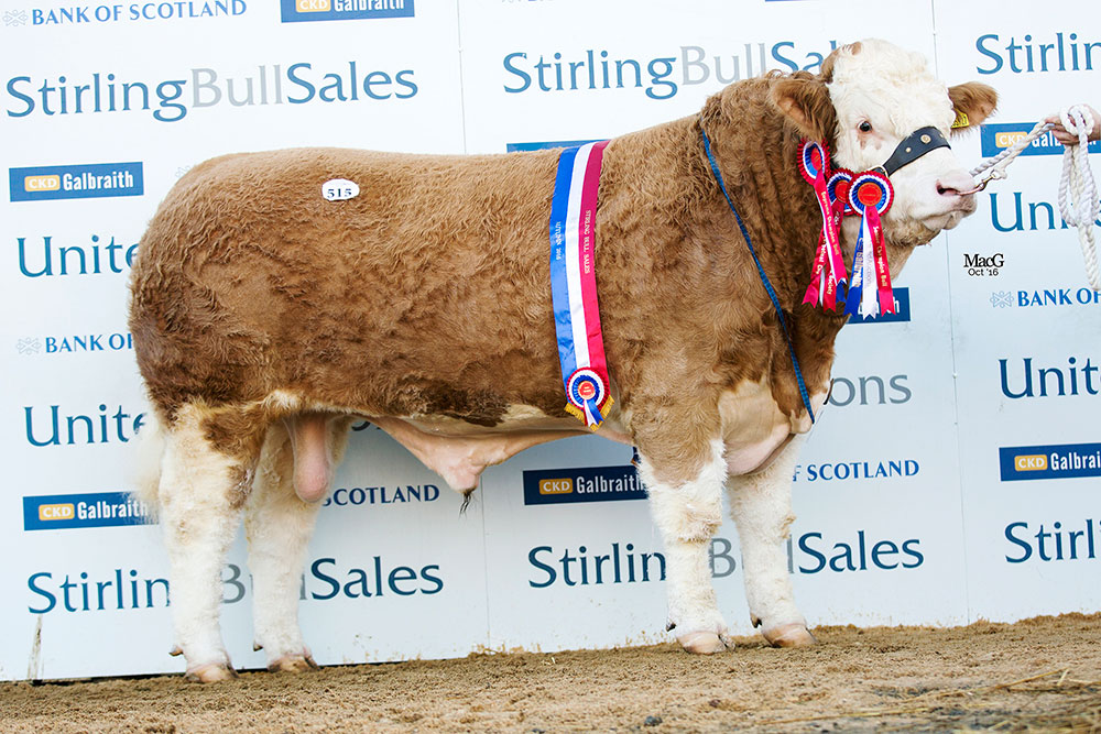 CORSKIE GINGERSNAP - OVERALL & SENIOR CHAMPION SOLD FOR 25,000GNS TO JH & vg wOOD (pOPES HERD)