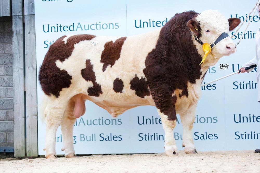 169-Kilbride-Farm-Gregor-10,000gns-0809.jpg