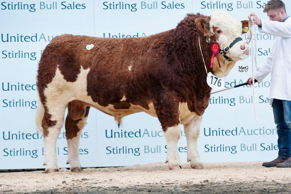 176-Kilbride-Farm-Goldstar-12,000gns-0822.jpg