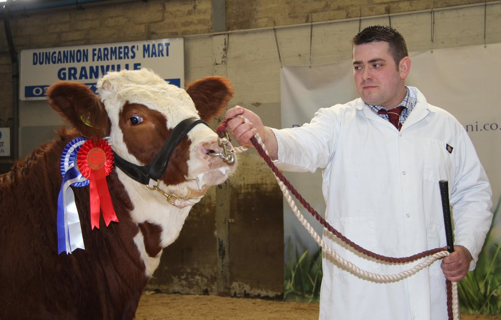 Richard McKeown exhibited the reserve female champion Castlemount Cute on behalf of Duncan McDowell, Newtownards.