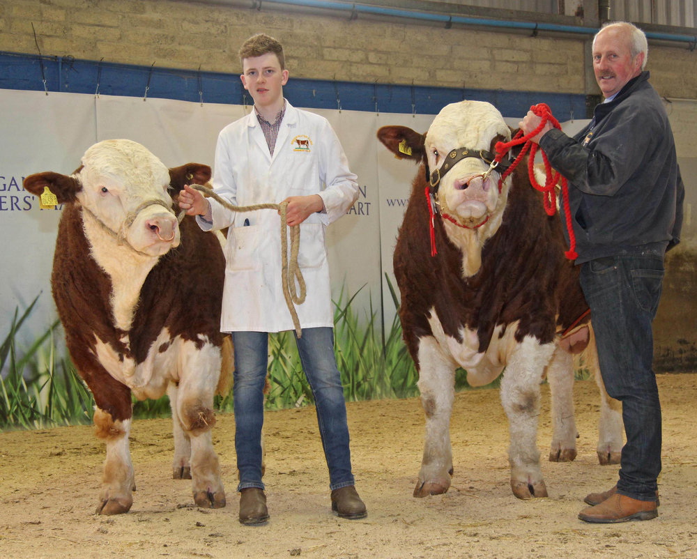 The sale leaders at the NI Simmental Club's spring show and sale in Dungannon were the 3,400gns Bridgewater Farm Hector and the 3,300gns Bridgewater Farm Gazza, shown by Nigel Glasgow and Conor Loane, Cookstown.